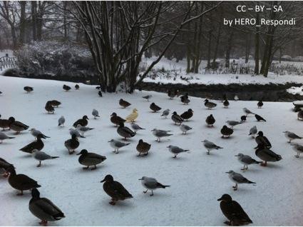 Fåglarna i Slottsparken