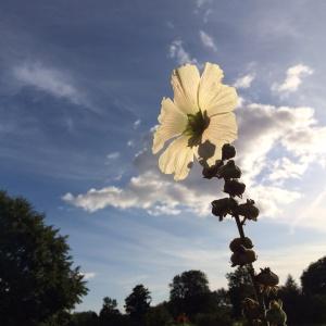 half-open flowers