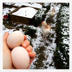 Dagens två ägg