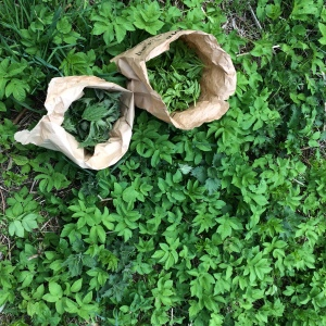 nettles and ground-elder