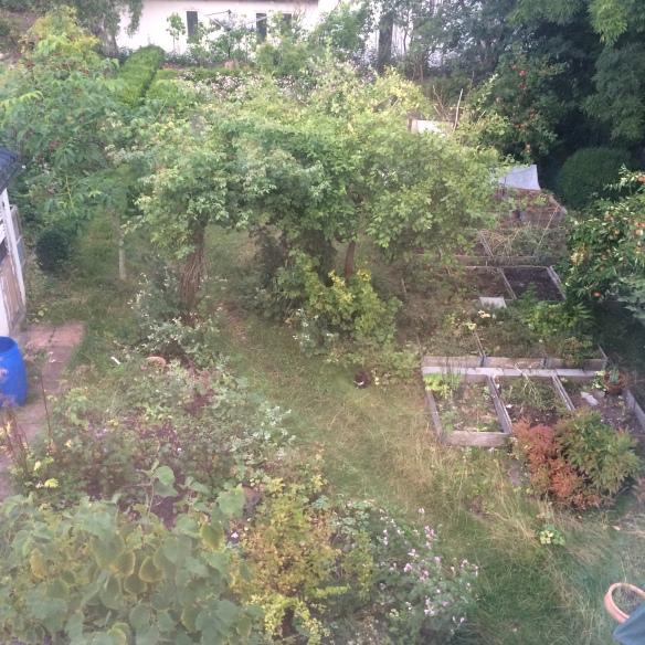 vinbärsbusken