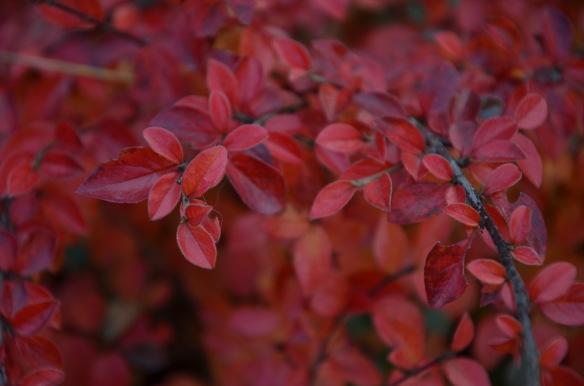 fall love 1