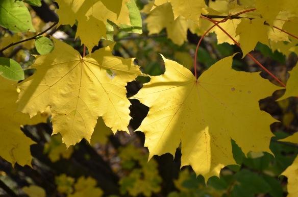 fall love 4