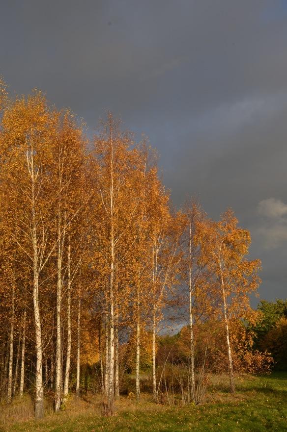 fall love 5