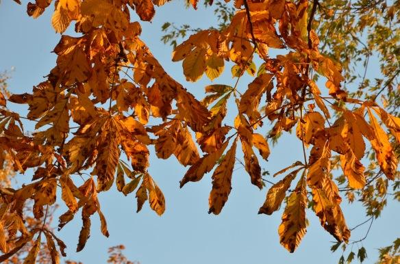 fall love 7