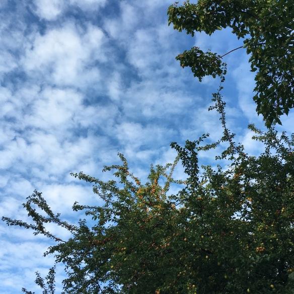 Träden är fyllda av naturens guld just nu.